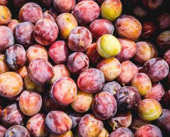Ze zijn er weer! Hollandse Opal pruimen €4,50 per kilo